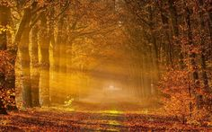 1920 x 1200 px Cool autumn backround by Kaden Bush for  - TWD