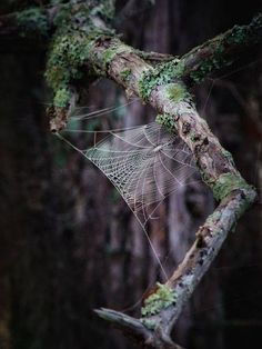 The Intricacy and Beauty of Spider Webs Mother Earth, Mother Nature, Spider Art, Spider Webs, Fantasy Magic, Bitsy Spider, Fotografia Macro, All Nature, Nature Witch