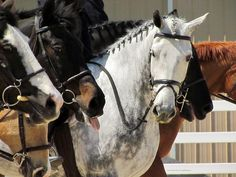"""winterstormathena: """" A - Day Horse Show 4/26/13 """""""