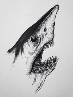 Coursework: shark pen drawing