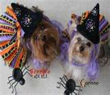 Image Search Results for linda higgins dog clothing