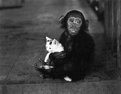 W. Eugene  SMITH :: A tamed chimpanzee hugging a cat at Dr. Albert Schweitzer's Mission Hospital / Lambarene, Gabon, French Equatorial Africa, 1954