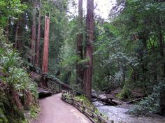 Just 11 miles from San Francisco, you'll find the Muir Woods National Monument, #California. (Photo: Courtesy of National Parks Service) #travel