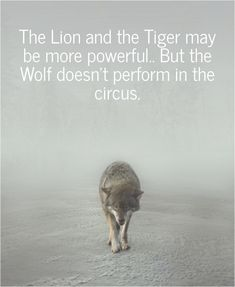 Image result for the tiger and the lion may be powerful but the wolf