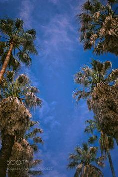 Palm trees in the Lisbons Botanical Garden (Jardim Botânico)...  sky spring nature travel vacation tree palm outdoors botanical garden daylight tropical exotic no pe