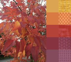 Fall Walk - #123quilt #colorplayfriday #color #palette #colorpalette #inspiration #colorinspiration #ilovecolor #colorcrush #ilovefabric #fabriclove #fabricaddict # Fall #autumn #leaves http://123quilt.blogspot.com/2016/10/color-play-friday-fall-walk.html