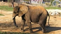 ROCKBRIDGE Co., Va. (WSET) - Another animal rights group is calling for the closure of the Natural Bridge Zoo in Rockbridge County after the most recent inspection from the USDA. The USDA's report from June 2017 found several violations, three of which are