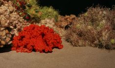 """Crochet Coral and Anemone Garden"" with sea slug by Marianne Midelburg.  Photos © The IFF by Alyssa Gorelick."
