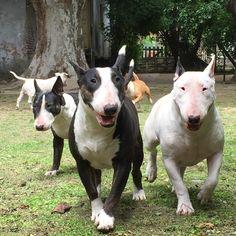 A posse of bullies.