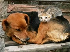 Dog and cat, outdoor lovin. Dog and cat friends.