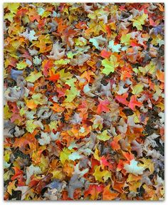 Joanna Morgan Designs: Fall Colors While They Last...