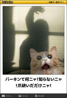 バーキンて何ニャ!知らないニャ!爪研いだだけニャ! Pretty Cats, Cute Cats, Funny Cats, Animals And Pets, Cute Animals, Funny Phone Wallpaper, Animal 2, Funny Photos, Jokes