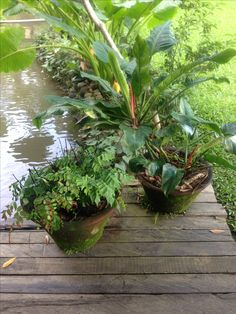 mossy pots, to smooth transition from soft to hard landscape
