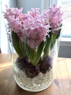 Grow hyacinth with just water put rocks or decorative rocks on bottom of large glass vase arrange bulbs and add water to bottom of bulbs blooms in around 2 weeks add water as needed never submerge whole bulb in water spring indoors during the winter time Indoor Flowers, Bulb Flowers, Indoor Plants, Tulpen Arrangements, Flower Arrangements, Floral Arrangement, Pierre Decorative, Decorative Rocks, Grand Vase En Verre
