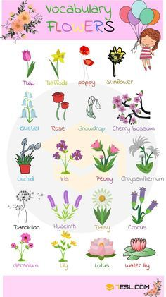 Learn English 348677196148449656 - Learn Plant and Flower Vocabulary in English through Pictures and Videos. Plants are one of five big groups of living … Source by Flowers Name In English, Animals Name In English, Flowers Name List, Flower Names, Learning English For Kids, English Lessons For Kids, Kids English, English Language Learning, Teaching English