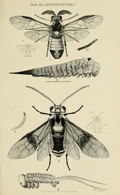 Australian insects. - Biodiversity Heritage Library