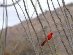 Avoiding the Thorns at Saguaro National Park
