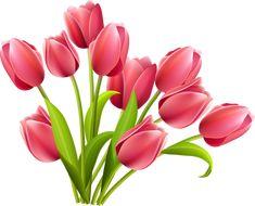 тюльпаны (2) [преобразованный].png