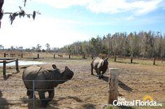 Safari Wilderness rhinos- Lakeland, FL, Central Florida