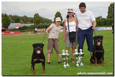 WORLD BEST Rottweiler    .jpg (720×486)