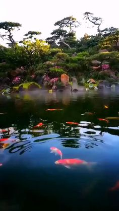Beautiful Photos Of Nature, Beautiful Nature Wallpaper, Beautiful Gif, Amazing Nature, Nature Photos, Beautiful Birds, Beautiful Landscapes, Beautiful Places, Beauty Of Nature