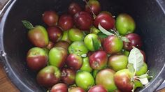 Landbokvinden: Æblegele