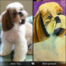 Newest portrait.. Fergie, Cute little Shih-Tzu