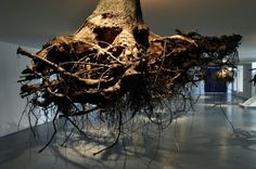 art, cool, interesting, nature, beautiful, Proof that Anything Can Be Beautiful: Giant Tree Roots as Art Exhibition