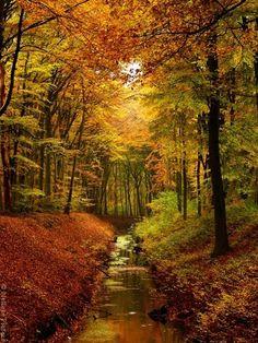 Autumn stream...sooo pretty!