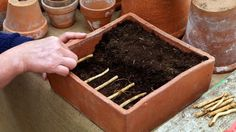 Odobraté korene udržiavame vlhké How To Dry Basil, Herbs, Plants, Food, Essen, Herb, Meals, Plant, Yemek