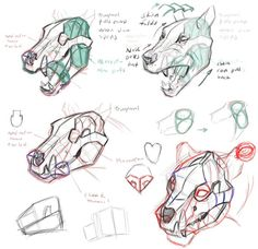 drawing animals tutorials art reference how to draw Animal Anatomy character design reference anatomy for artists Jonathan Kuo illustrsation Dog Anatomy, Animal Anatomy, Anatomy Drawing, Girl Anatomy, Head Anatomy, Animal Sketches, Animal Drawings, Drawing Sketches, Art Drawings