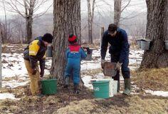 Northwest Pennsylvania Maple Association