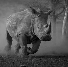 Unicornio African Rhino, African Animals, Safari Animals, Cute Baby Animals, Large Animals, Animals And Pets, Rhino Pictures, Rhino Tattoo, Rhino Art