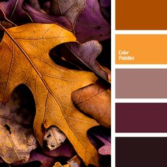 beige-brown brown color fall color palette fall colors fall palette leaves color orange color purple colors reddish brown shades of brown. Palettes Color, Fall Color Palette, Colour Pallette, Color Palate, Orange Palette, Fall Paint Colors, Kitchen Color Palettes, Rustic Color Palettes, Gold Palette