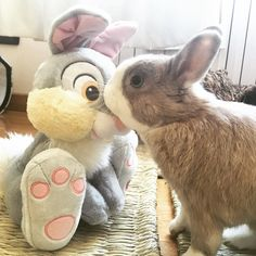Mummy just brought home a new bunny! I'm checking up him carefully! Don't trust…