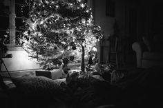Sleeping Under The Tree Photo by Sherri Davis — National Geographic Your Shot