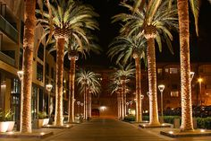 San Jose California Palm Trees.
