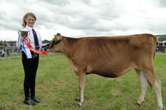 Joanna Grigg from Venton Farm, Monkleigh, led a Whitehill jersey to win her Junior Showman category.