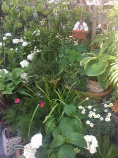 Container Gardening, Plants, Plant, Container Garden, Planets