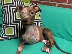 Abused Dog With Leg Cut Off Still Has The Biggest Heart
