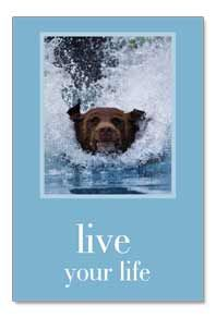 Live Your Life Joyfully Birthday Card by Cardthartic