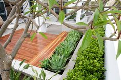 Amazing Ice Plant decorating ideas for Stunning Landscape Contemporary design ideas with agave boulders copper light drought tolerant garden lighting grasses ground cover hillside Modern Garden Design, Landscape Design, Patio Design, Modern Landscaping, Backyard Landscaping, Coastal Landscaping, Terrasse Design, Drought Tolerant Garden, Contemporary Patio