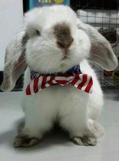A Bunny | Cutest Paw