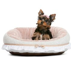 5 Dog beds to pamper your furry baby