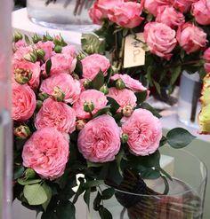 188 best flower identification images on pinterest bulb flowers pink garden rose mightylinksfo
