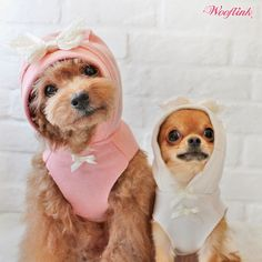 WOOFLINK - Hip designer dog clothes: STRAWBERRY CUPCAKE ♥