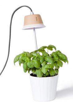 Plants lamp - Cynara BUY IT NOW ON www.dezzy.it!