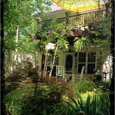 Kathy Day's Garden (Georgia) Wouwie!!!!