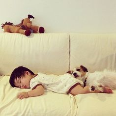 When this pup found the best pillow in the house. | The 31 Most Important Animal Cuddles Of 2013