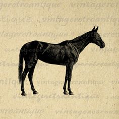 Printable Digital Antique Horse Graphic Illustration Download Image Vintage Clip Art. Digital graphic. This vintage printable digital artwork is high resolution for printing, fabric transfers, papercrafts, pillows, t-shirts, and more. Personal or commercial use. This digital image is high quality at 8½ x 11 inches large. Transparent background version included with every digital image.